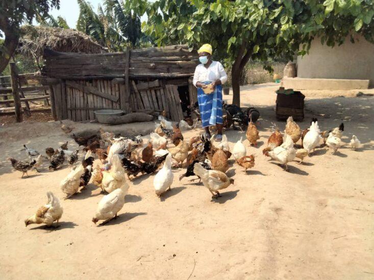 Cyclone IDAI small livestock restocking programme yields positive results